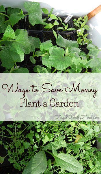 Ways to Save Money, Plant a Garden – Thrifty Thursday @ LWSL