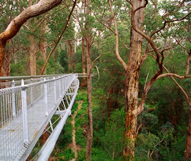 Valley of the Giants Tree Top Walk, Walpole-Nornalup National Park, Australia