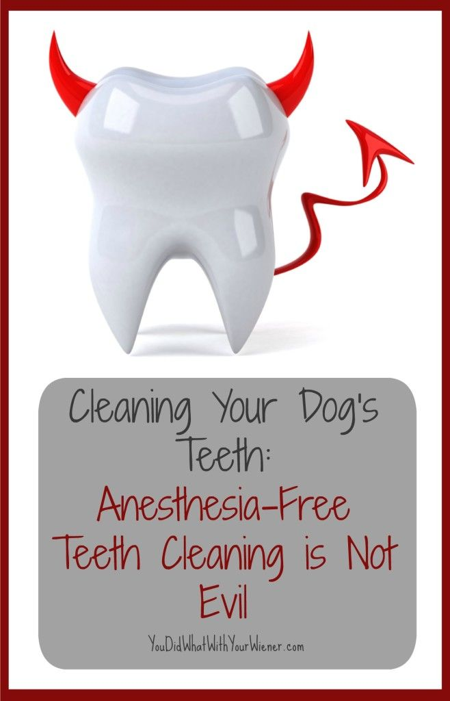 Anesthesia-free Teeth Cleaning Isn't Evil