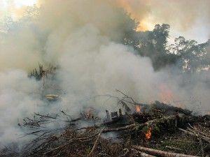 WNF: Drie kwart regenwouden Borneo weg in 2030/aziatischetijger.nl/28-04-15/ Borneo