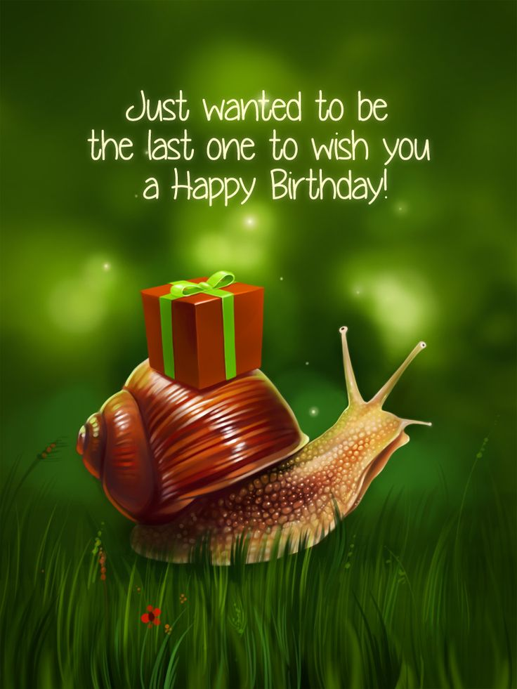Snail Present | Happy Birthday/Happy Anniversary | Happy ...