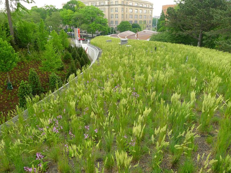 The leaf-shaped living roof supports over 40,000 plants—grasses, spring bulbs, and perennial wildflowers—adding the Garden's first structured landscape to its collection Aaron Booher, HM White