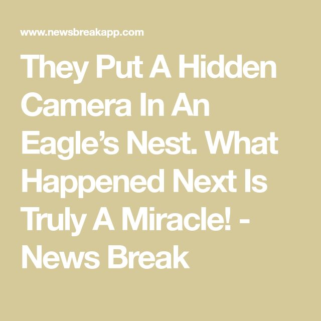 They Put A Hidden Camera In An Eagle's Nest. What Happened Next Is Truly A Miracle! - News Break