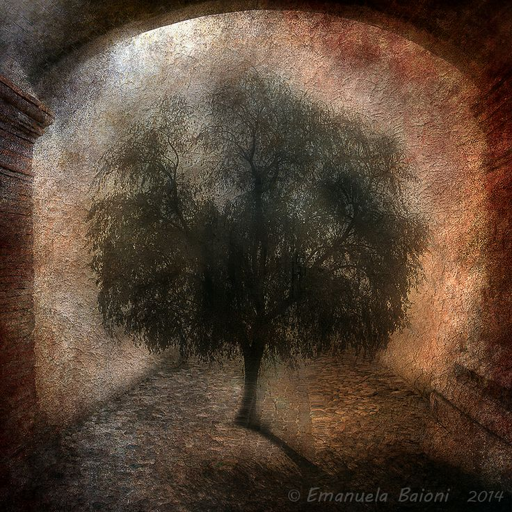 """""""The tree of hope"""""""