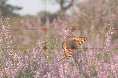 Verschil in compositie: regel van derden en de gulden snede | Cursussen | Zoom.nl