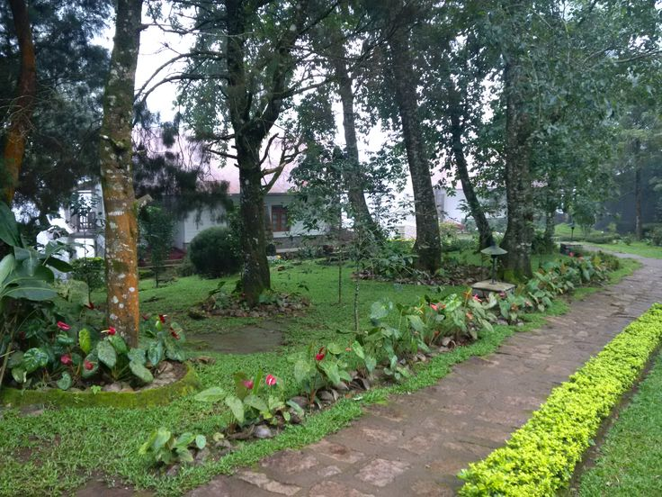 Windermere Estate - Munnar