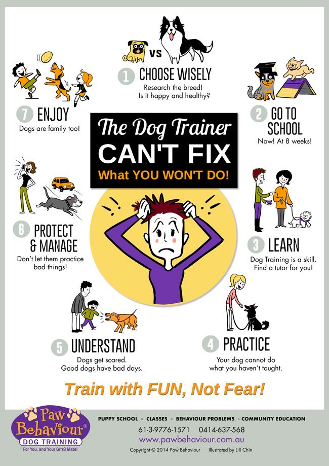 The Dog Trainer Can T Fix What You Won T Do