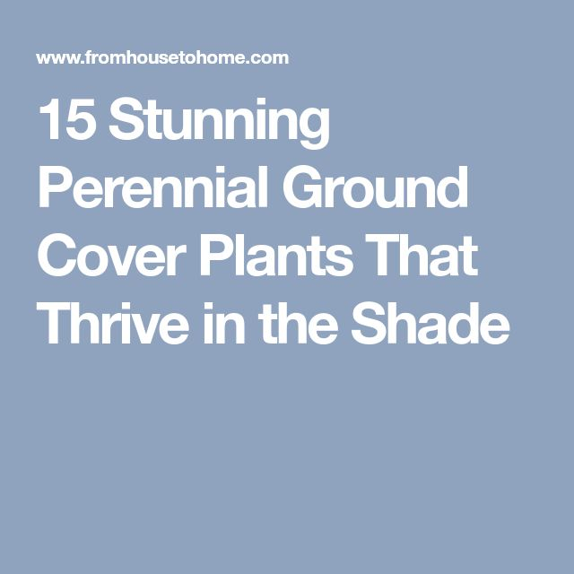 15 Stunning Perennial Ground Cover Plants That Thrive in the Shade
