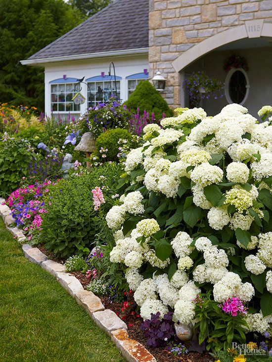 Most hydrangeas bloom from midsummer to fall, making them ideal partners for mixed flower borders. In this garden, a large 'Annabelle' hydrangea anchors a border packed with perennials and annuals. Other flowers here include begonia, sweet alyssum, Oxalis, phlox, sedum, Lythrum, Torenia, and marigold.