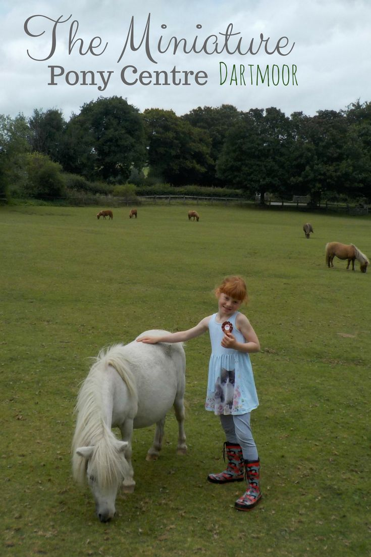 Our review of The Miniature Pony Centre in Dartmoor - what to do, what to see, and what animals you can meet - if you love ponies, you'll love this place!