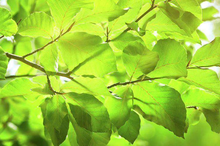 Jane Star Photograph - Spring In The Forest by Jane Star  #JaneStar #Spring #Foliage #Leaves #ArtForHome #InteriorDesign #HomeDecor