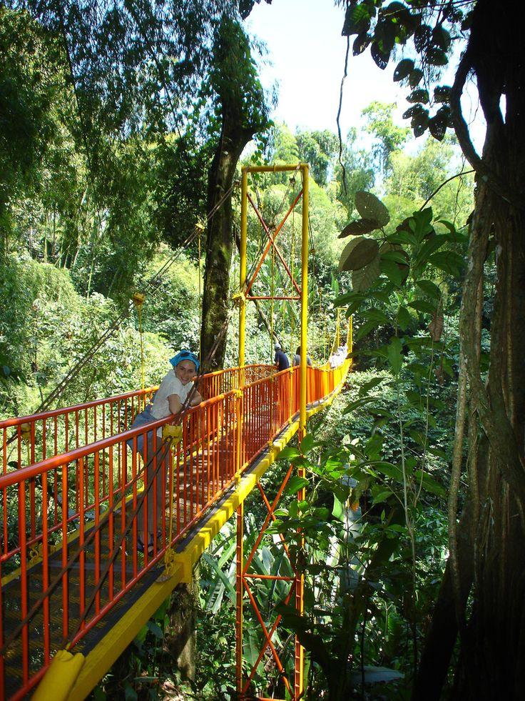 Jardín Botánico del Quindío,Calarcá