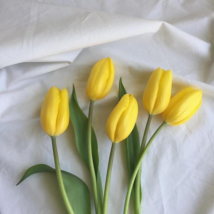 лимонные тюльпаны фото ракурс