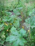 Utilisations du Bicarbonate de Soude pour le Jardin, les Animaux et le Bricolage