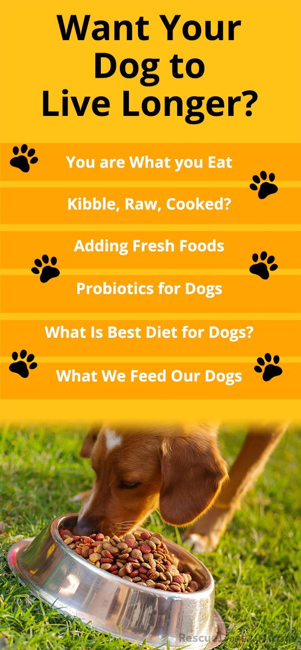 What Should I Feed My Dog Dog Food Recipes Best Diet For Dogs