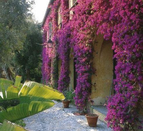 Фото 22 - Вертикальное озеленение фасада вьющимися растениями