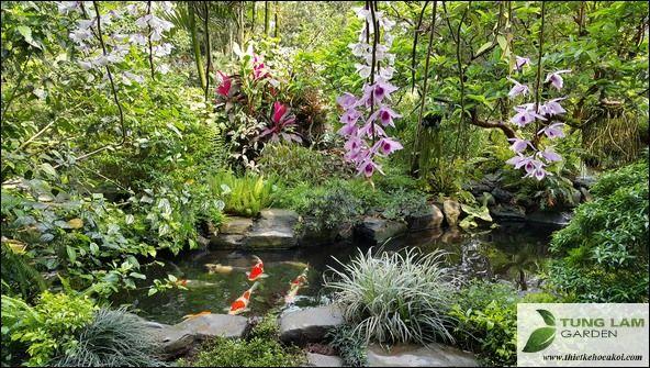 Hồ cá Koi và chút suy tư của người làm nghề thiết kế sân vườn, hồ cá ~ Thiết kế hồ cá Koi, thiet ke ho ca Koi