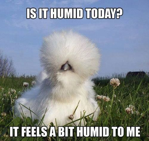 Is it Humid Today? Need a little control? Take control of your hair - bhave smoothing system. #bighair #curlyhair #frizzyhair #kinkyhair #humid #summerhair #smooth #straighten #control #hairdressers #bhave #smoothingsystem #outofcontrol #smoother #straighter #controlable #hair #takecontrol #tamethemane #thisisqueensland #discoverqueensland #herveybay #visitfrasercoast #tropicalweather #tropics #australia #hothumid #hairstyles #straighten  0741254220 www.headlines4hair.net.au
