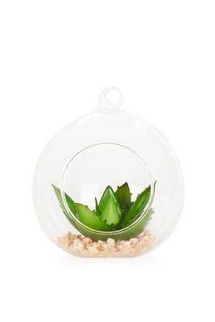 Medium Plant Globe