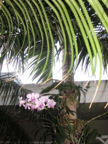 Orchids attached to palm trees give a tropical look to the landscape.  Slide show.Beautiful Backyards, Outdoor Living, Palms Trees, Palm Trees, Orchids Attached, Gardens, Patios Ideas, Green House, Orchids Green