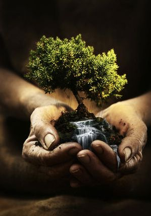 :): Bonsai Trees, Inspiration, Photos Manipulation, Nature, Mothers Earth, Hands, Trees Of Life, Plants, Earth Day