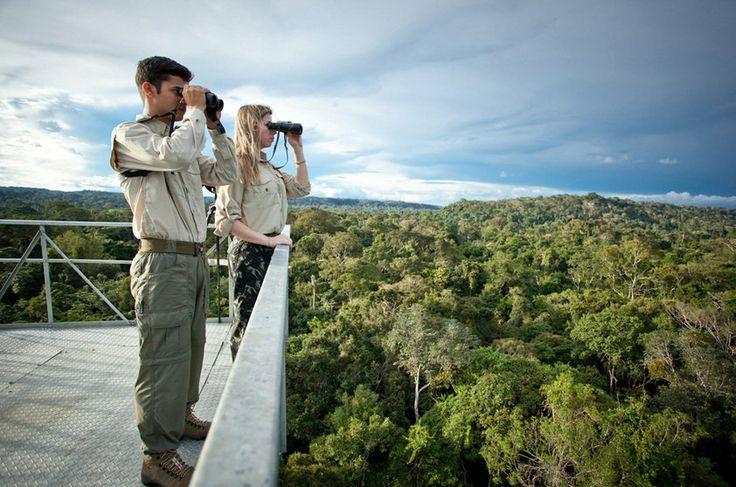 Observadores de aves na torre de observação (50 m) do Cristalino Jungle Lodge, Alta Floresta, Mato Grosso