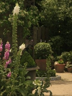 Kentucky Roses Display Garden NSW