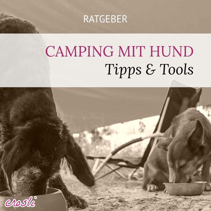 Camping mit Hund: was braucht es wirklich wenn du mit deinem Hund campen gehst, mit Zelt, Wohnwagen, Wohnmobil?