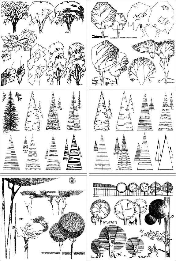 Nature drawing pencils black and white trees