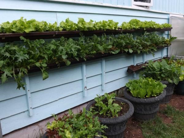 Gutter garden Garden Tips and Tricks Pinterest