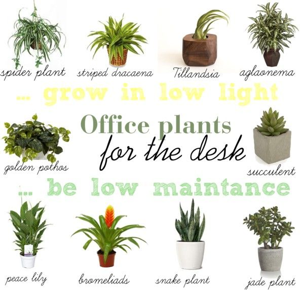 find a way by jwp: Low light and low maintance plants for your office desk