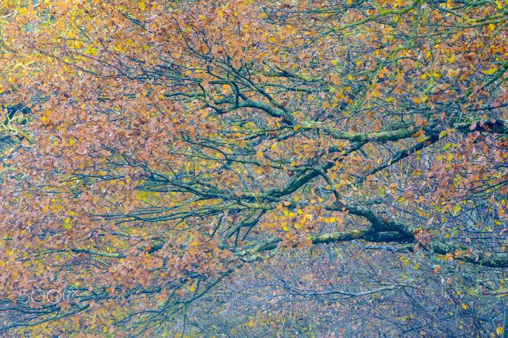 Autumn colors - Autumn foliage using a 500mm to compress the leaves and the colors. Made on a trip to Lac du Der for the cranes.  If you would like to experience and join us once on a trip, look at www.andregilden.nl  This image is protected by copyright. To reproduce, distribute, publish or use images and video at any way is strictly prohibit without written permission of André Gilden.