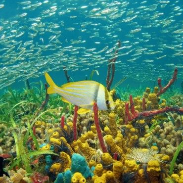colorful-coral-reef-diving-in-taganga-tour-santa-marta-colombia-lulo