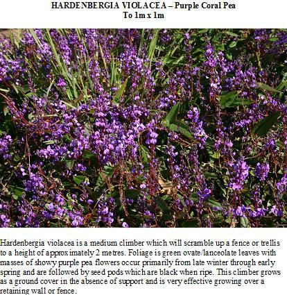 Hardenbergia violacea - Knox Environment Society