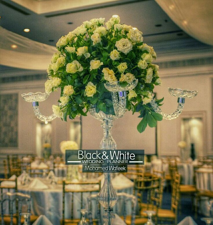 Pin by blackwhite wedding planner egypt on wedding planner in pin by blackwhite wedding planner egypt on wedding planner in egypt pinterest wedding planners and weddings junglespirit Images