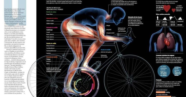 """""""A sombrosa infografía que nos muestra cómo el ciclismo hace de nuestros cuerpos una máquina perfecta. No hay peligro de mayores lesione..."""