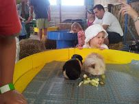 Coleman's Farm Park. Great holiday attraction for little ones, near The Orchards Holiday Park