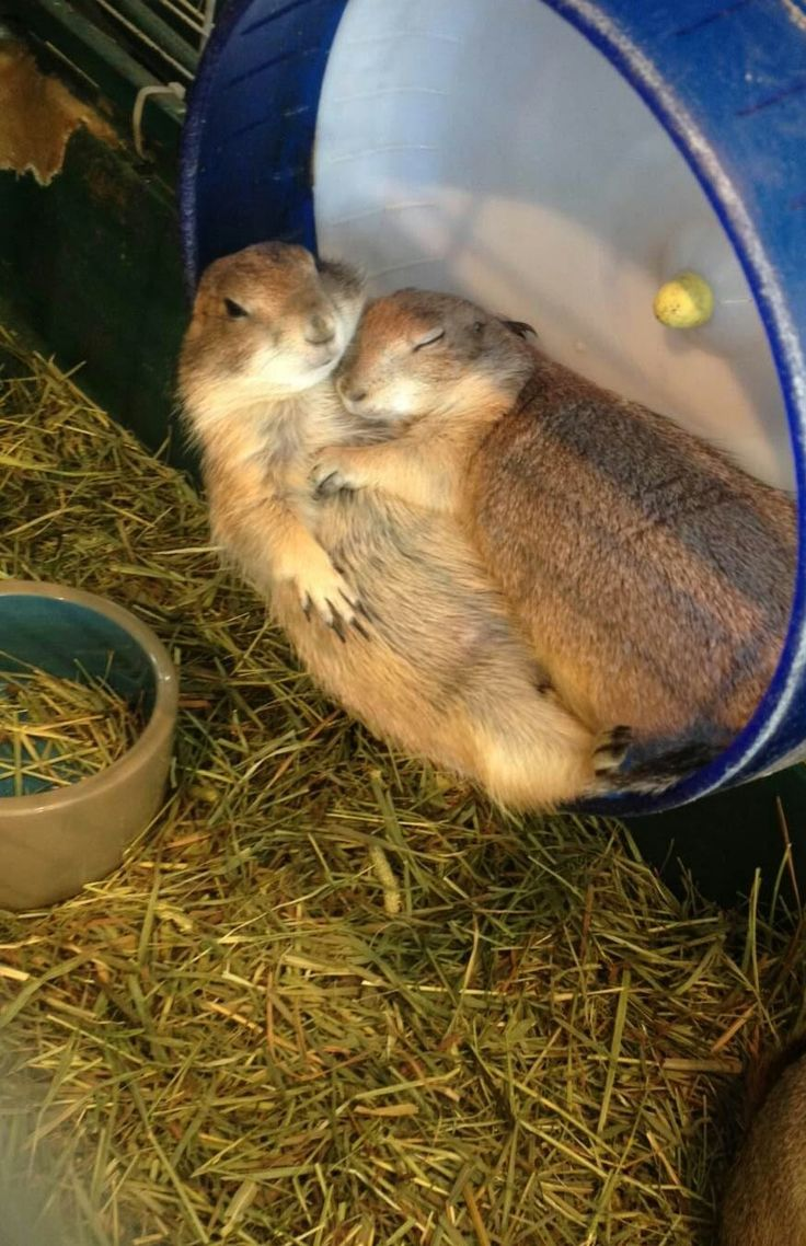 His arm has fallen asleep but he doesn't have the heart to wake her