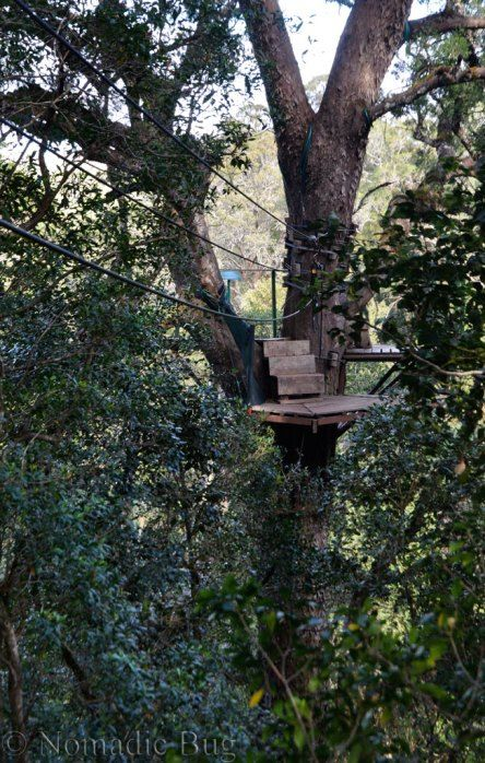 TREETOP CANOPY TOURS, Platform 3, Garden Route, South Africa Nomadic Existence
