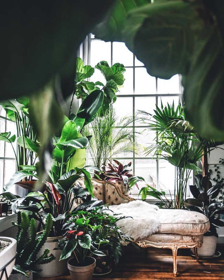 stylist design house plant seeds. Interior Plants  Indoor Conservatories Weather Exterior Gardens Inside House 604 best images on Pinterest Greenhouses Green houses and