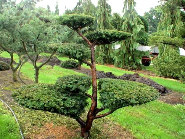 green colors and yard landscaping ideas