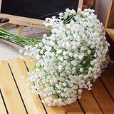 Amazon.com : 60 Stems of Fresh Cut Gypso Perfecta Fillers | Baby's Breath Fillers | Fresh Flowers Wholesale Express Delivery | Perfect for Birthdays, Anniversary or any occasion. : Grocery & Gourmet Food