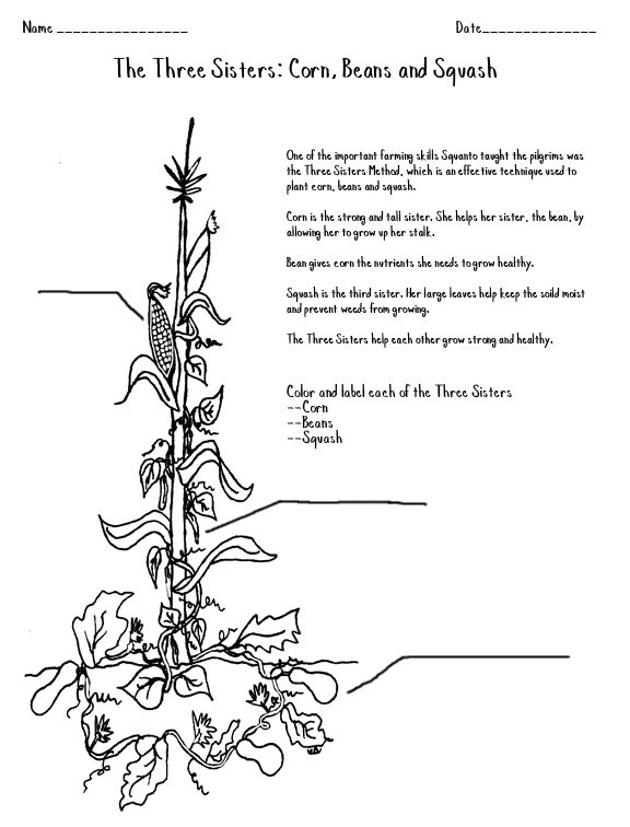 free coloring pages horticulture | 38 best images about Wampanoag on Pinterest | Gardens ...