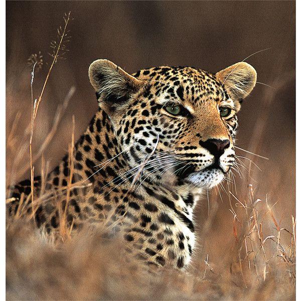 Kings Camp, Timbavati Private Nature Reserve - South Africa Safari
