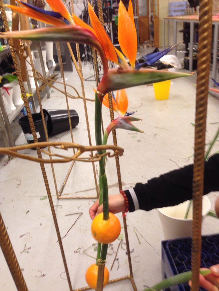 Strilitsia og appelsiner i gullstativ.