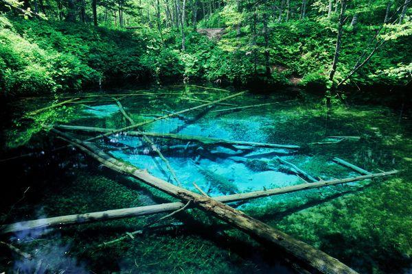 湧き水が創りだす、ターコイズブルーの神秘 弘前の「桜の絨毯」にはちょっと時期が合わなそう、という人にオススメしたいのが、北海道網走管内斜里郡清里町にある小さな池、「神の子池」