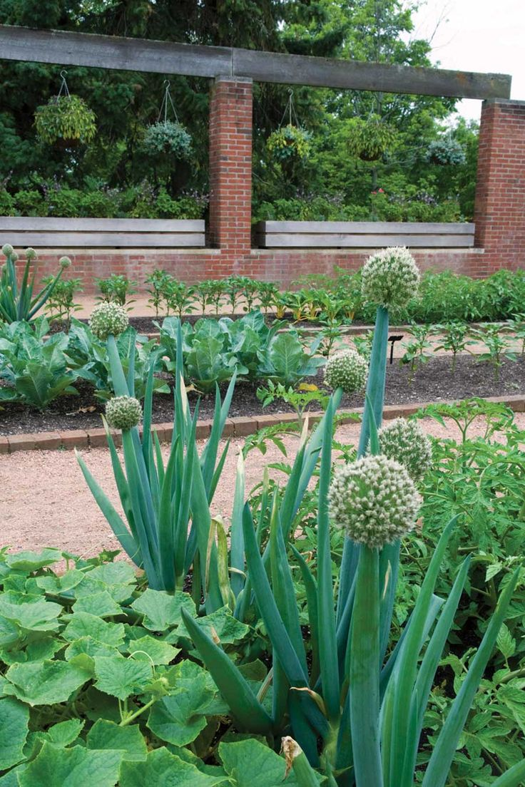 Creative environments landscape co edible gardens - Creative Environments Landscape Co Edible Gardens Beautiful Enough To Eat Edible Landscaping Download
