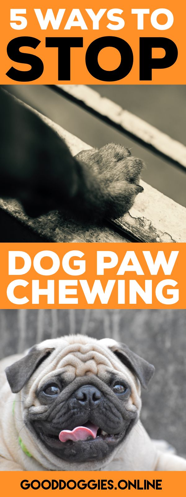 best 25+ dog chewing paws ideas on pinterest | puppy teething