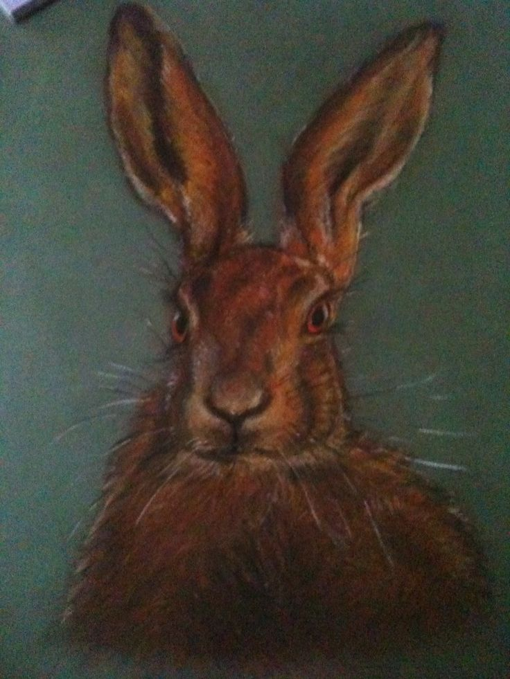Hare  Study in soft pastels.