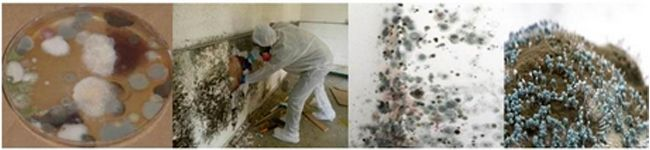 Toxic Black Mold Symptoms, Testing & The HLA-DRBQ Gene: Could you be suffering from mold exposure?